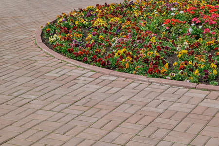 A rectangular paving stone path around a round flowerbed with multicolored flowers. On the flower bed, violets or pansies are planted and grow. Flowers of different colors. Background, backdrop. Banque d'images