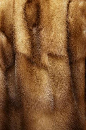 visone: pelliccia visone Archivio Fotografico