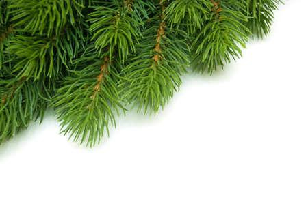 pine branch in the corner in white background