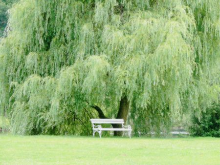The white sitting bench under the weeping willow Stock Photo