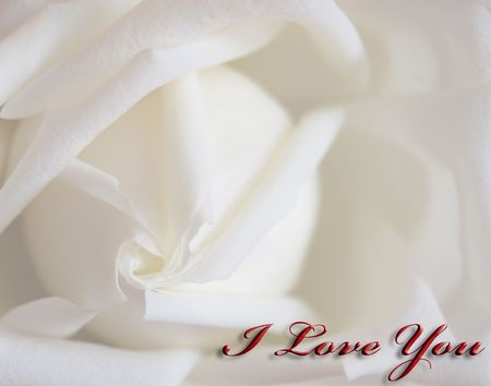 White rose background with the I Love You text photo