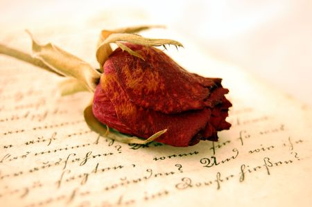 Dried red rose on an open old book romantically lit photo