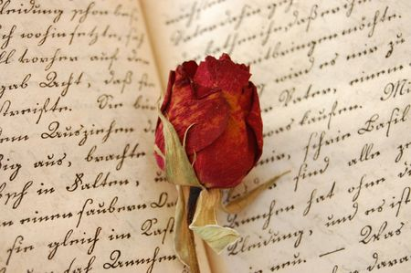 Dried red rose on an open old book photo