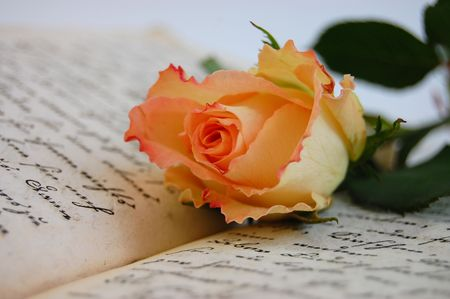 Delicate rose on an open old book Stock Photo - 2669772