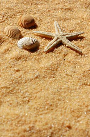 Starfish and seashells on the golden sand in sunlight photo