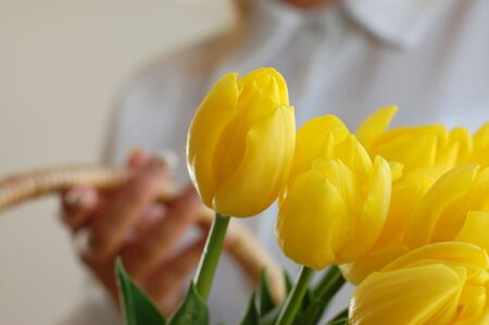 Woman holding a wicker basket full of vibrant yellow tulips photo