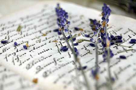 Dry lavender on an old book closeup photo