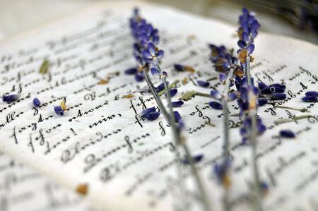 flores secas: Lavanda seca en un primer plano libro viejo Foto de archivo