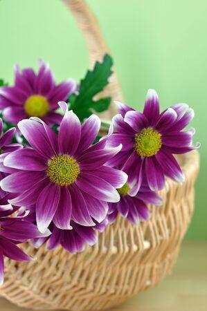 Bunch of purple daisies in a wicker basket
