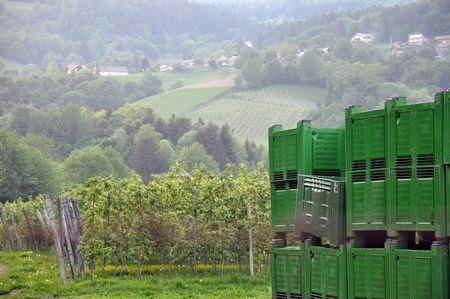 Big green crates at the apple plantation photo