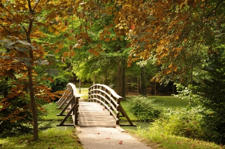 Wooden bridge over the stream and first autumn leaves photo