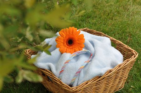 Wet orange gerbera on a soft blue blanket in a wicker basket in sunshine under the tree photo
