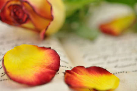 Rose and rose petals on diary photo