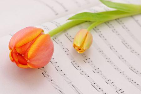 Ein orange Tulip auf Musik Blatt Lizenzfreie Bilder