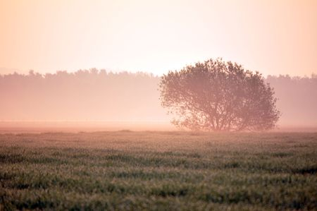 Tree in the foggy morning Stock Photo - 6854438