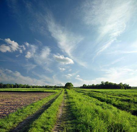 Path through the spring landscape