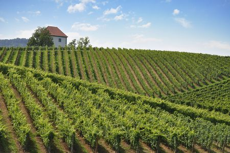 House among the vineyards in summer.Slovenske Konjice, Slovenia Stock Photo - 7572895