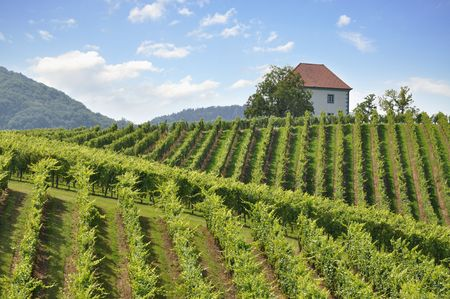 House among the vineyards in summer. Slovenske Konjice, Slovenia Stock Photo - 7572891