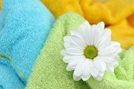 Daisy in a pile of fresh towels photo