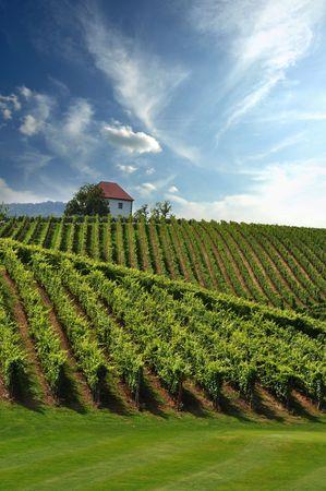 House among the vineyards in summer. Slovenske Konjice, Slovenia