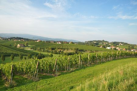 Meadow and vineyards. Škalce, Slovenia Stock Photo - 7650481