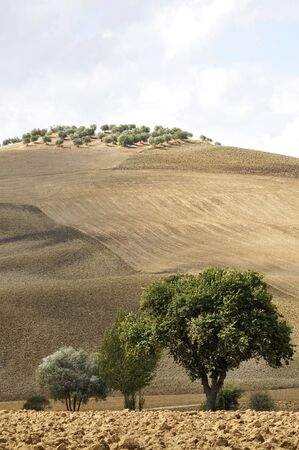 Typical Tuscan landscape, Val D'Orcia, Italy Stock Photo - 7963376
