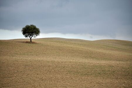 val dorcia: Lone tree in the plowed fields. Val DOrcia,Tuscany, Italy