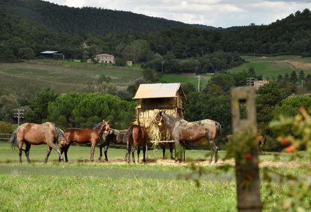 Horses feeding in the pasture photo