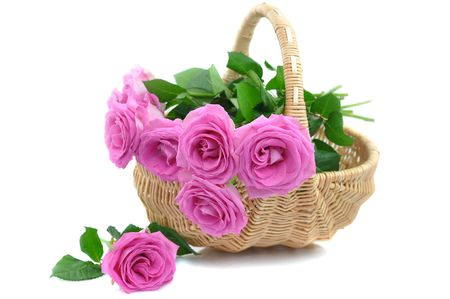 Pink roses in a wicker basket, isolated on white  photo