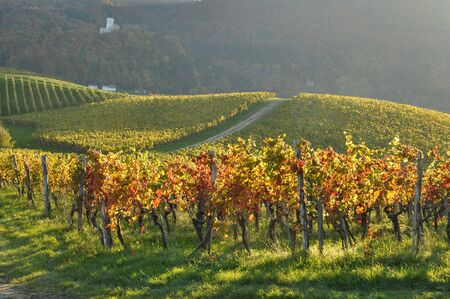 Vineyards in autumn with the castle in the distance. &Aring,&nbsp,kalce, Slovenia Stock Photo