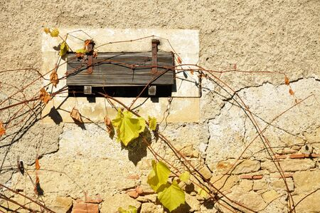 Old wooden shutter and vine leaves photo