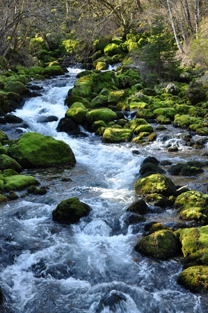 The forest creek, Gljun. Bovec, Slovenia photo