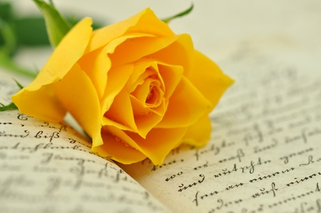 Yellow rose on an old book