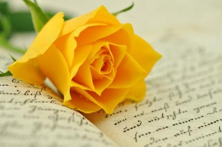 rękopis: Róża żółta na starej książki