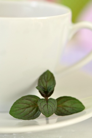 Cup of tea and fresh mint  photo