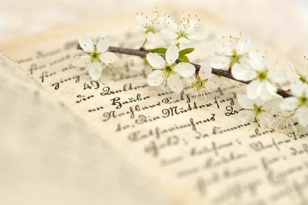 Cherry blossom on a diary