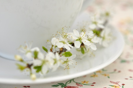 Cup of tea and cherry blossom photo