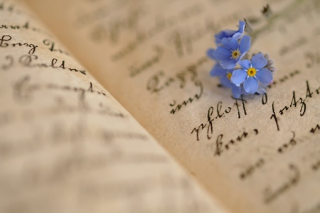 Forget-me-nots on an old diary photo