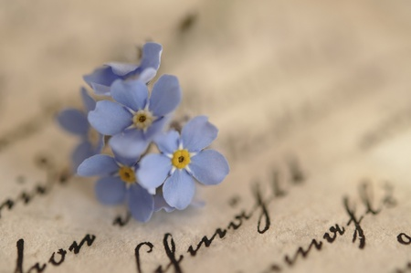 Vergissmeinnicht auf ein altes Tagebuch Lizenzfreie Bilder
