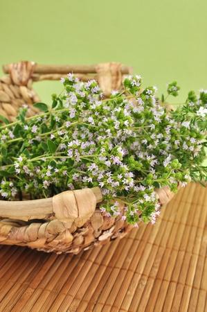Blooming oregano in a wicker basket