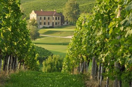 slovenia: House among the vineyards in summer. Slovenske Konjice, Slovenia