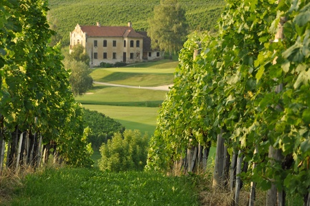 House among the vineyards in summer. Slovenske Konjice, Slovenia Stock Photo - 9977536