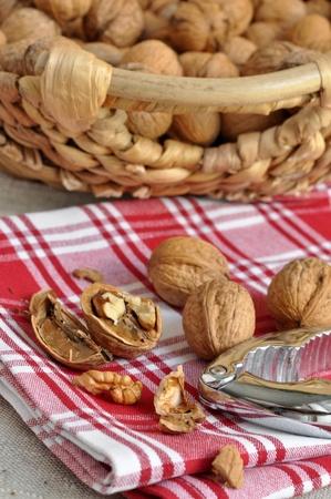 Freshly cracked walnuts and nutcracker photo