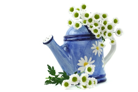 White daisies and blue decorated watering can, isolated on white photo