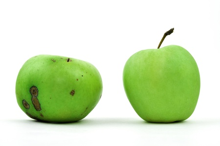 rotten fruit: One bad and one perfect green apple, isolated on white Stock Photo