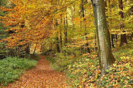 autumn path: Path through the colorful autumn forest Stock Photo