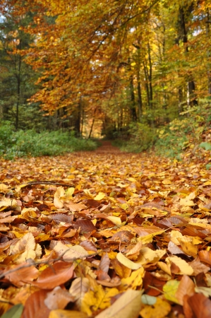 Low view at the colorful autumn forest path