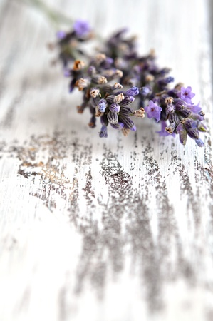 Blooming lavender on an old white wooden table