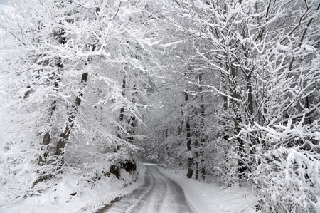 winter road: Road through the snowy winter forest  Stock Photo
