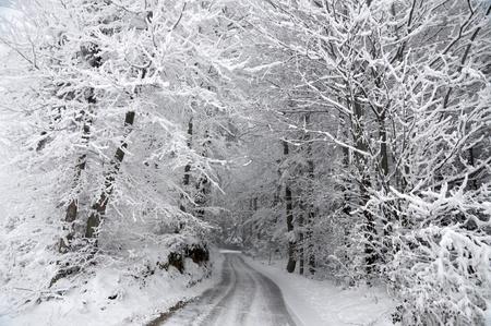 Straße durch den verschneiten Winterwald Lizenzfreie Bilder